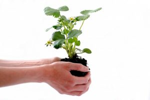 plant, isolated, human